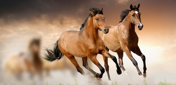 Конокрады из Тувы, похитившие табун лошадей на Алтае, задержаны местной полицией