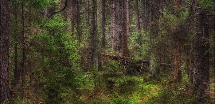 В Чемале нашли заблудившегося в лесу 12-летнего мальчика