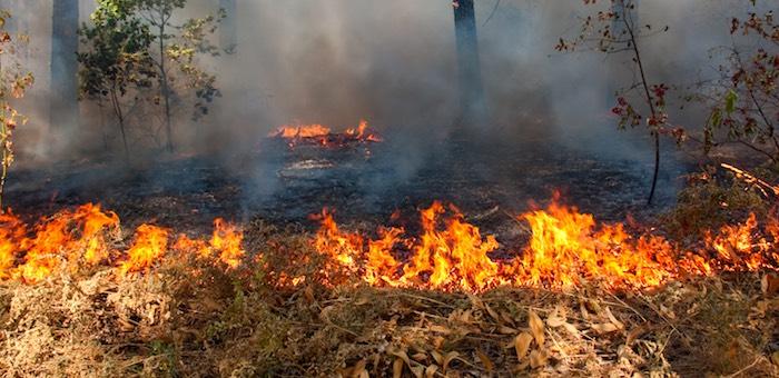 МЧС предупреждает о возросшей опасности возникновения пожаров в Чемальском районе
