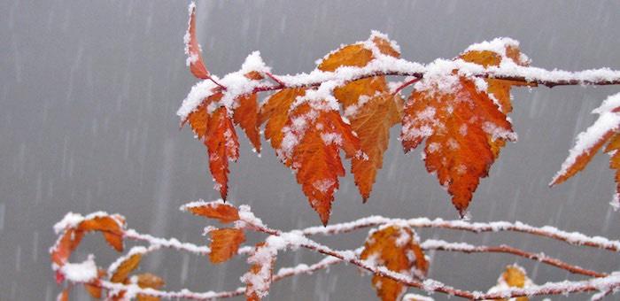 Мокрый снег, гололедные явления, усиление ветра: осень наступает