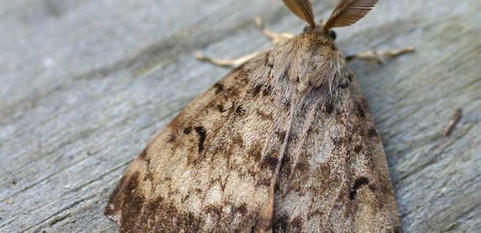 Специалисты Рослесзащиты не нашли в лесу сибирского шелкопряда