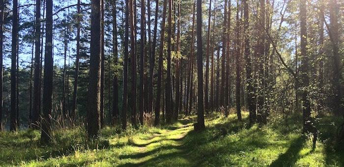 В Горно-Алтайске создадут лесопарковую зону