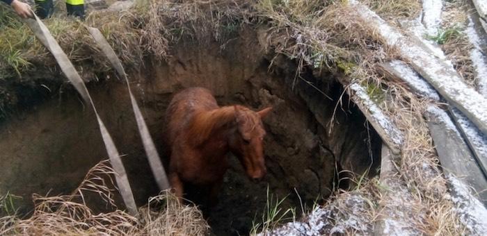 Онгудайские пожарные спасли лошадь