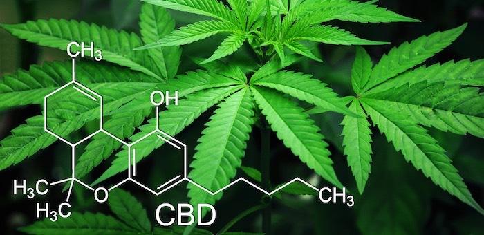 Горно алтайск марихуана ноотропы марихуана