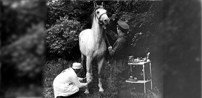 Оказывал хирургическую помощь раненым лошадям под обстрелом противника