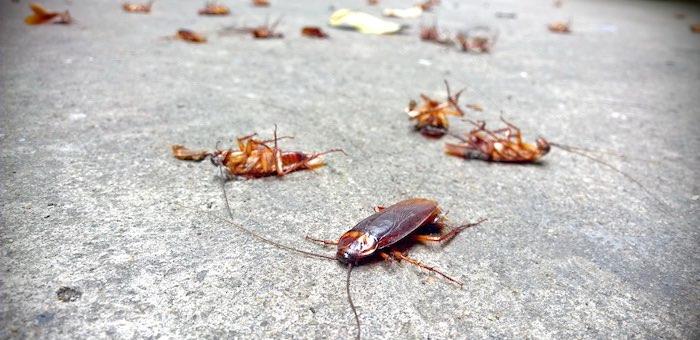 «Обильное количество тараканов» обнаружено в одном из крупнейших торговых центров