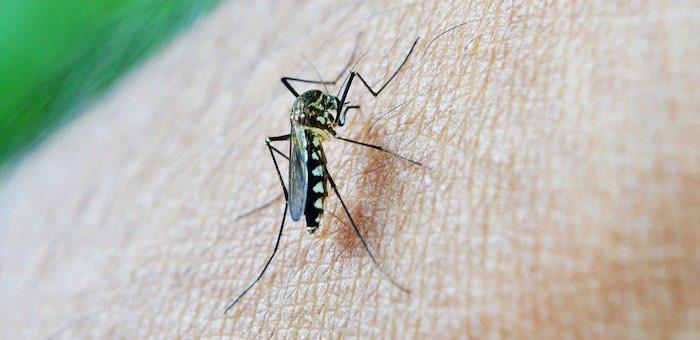 На Алтае в начале зимы зафиксирован случай заболевания тропической малярией