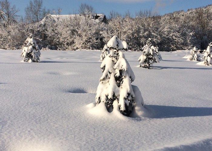 В Горном Алтае начали подготовку к прохождению паводка