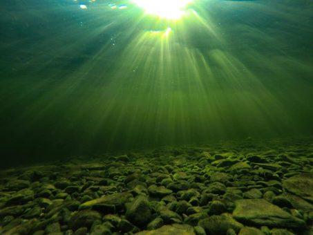 Подводный мир Телецкого озера в январские морозы. Фотозарисовка