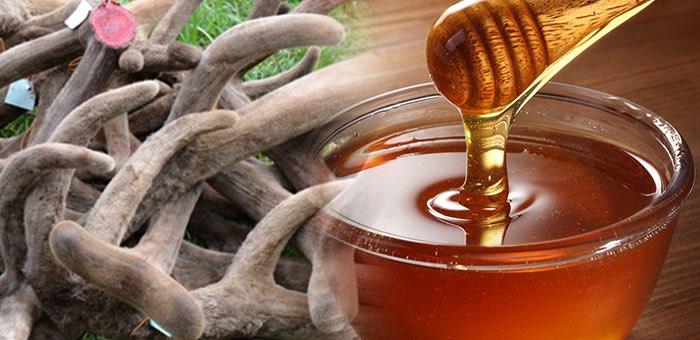 Мед и панты Горного Алтая получат специальный «географический» бренд