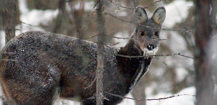Кабарга, козероги и никаких браконьеров: инспекторы провели рейды на заповедные озера