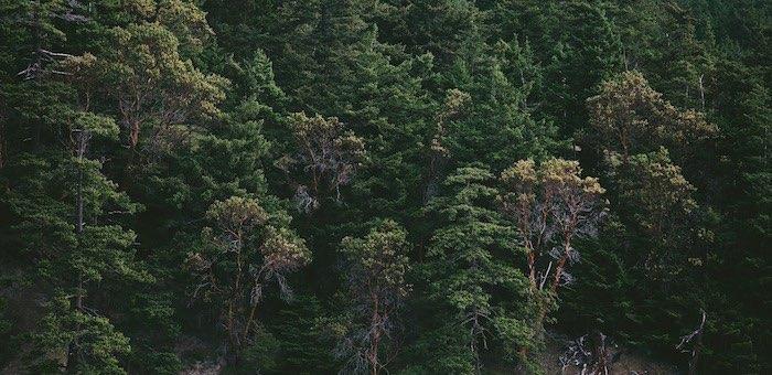 131 тысячу гектаров леса планируют обработать от непарного шелкопряда на Алтае