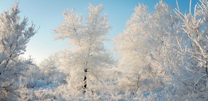 Морозы не уходят: Алтай ждет очередное похолодание