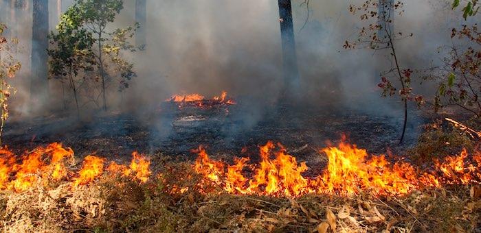 Горячая пора. За сутки на Алтае произошло сразу шесть пожаров