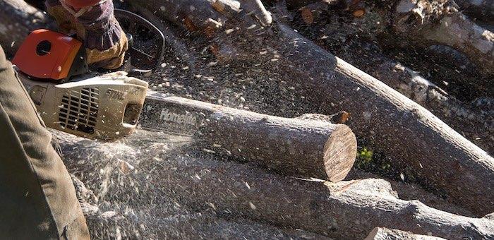 Сотрудник лесничества за взятки раздавал права на заготовку древесины
