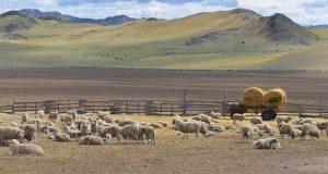 В сельском хозяйстве Республики Алтай грядут перемены