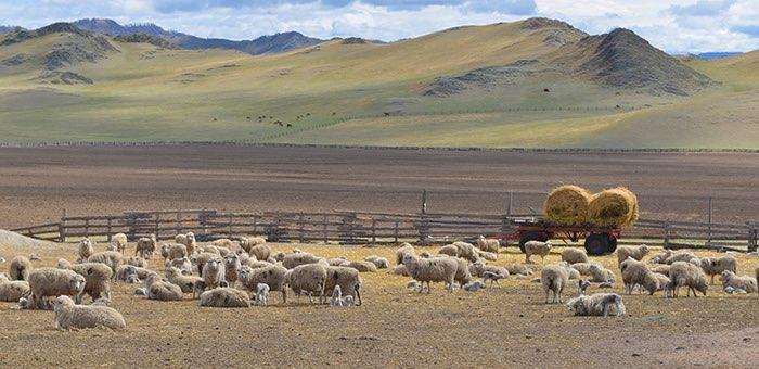 В сельском хозяйстве Республики Алтай грядут позитивные перемены