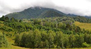 Суд отменил сделку по продаже крупного лесного участка в Турочакском районе
