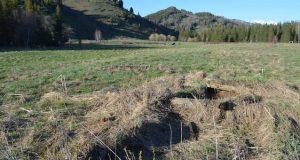 Ученые нашли заброшенную деревню в Катунском заповеднике