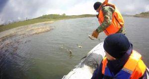 Участники акции «Водоемы без сетей» освободили 10 килограммов карасей
