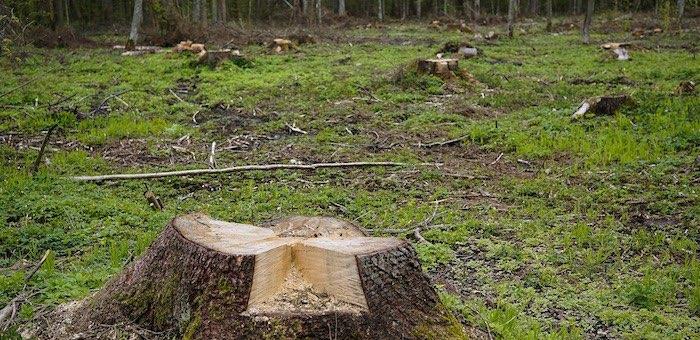Вместо сельхозработ – вырубка леса: турочакское предприятие оштрафовали на 450 тыс. рублей