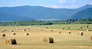 На Алтае началась заготовка кормов