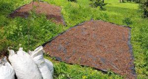 Менее чем за месяц на Алтае загублено свыше 2 тонн «золотого корня»