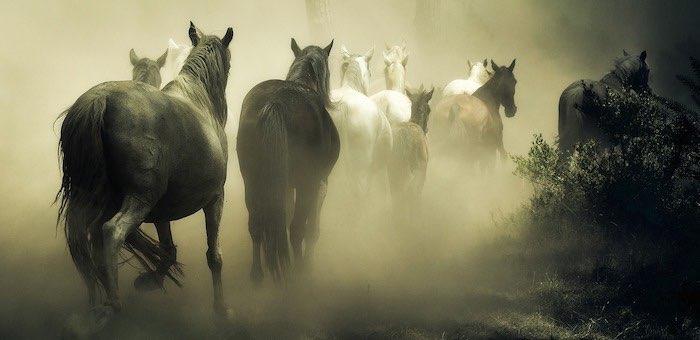 Очередной конокрад, похитивший девять лошадей на Алтае, задержан в Туве