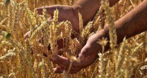 В Талде открыт современный зерновой комплекс