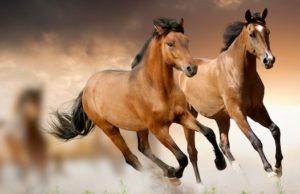 Скотник украл лошадей близ Ябогана и продал их через газету