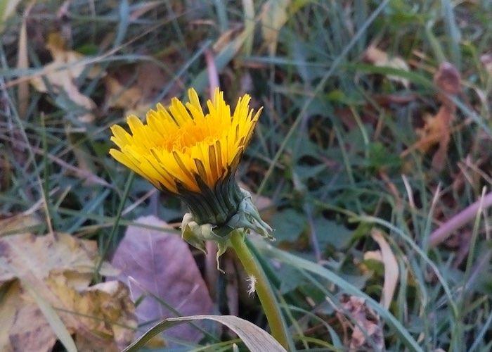 Цветут цветы: на Алтае установлен температурный рекорд