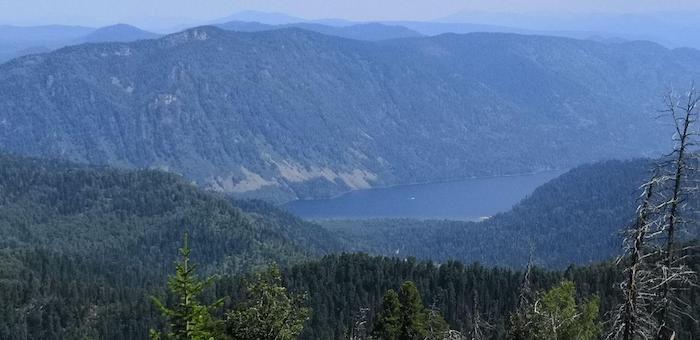 Непарный шелкопряд больше не угрожает лесам Горного Алтая