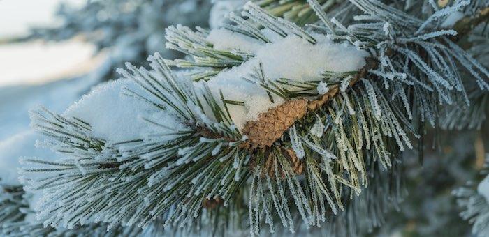 Ночью в Республику Алтай придут тридцатиградусные морозы