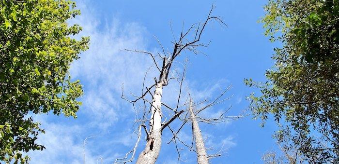 Пожары, болезни и насекомые-вредители: от чего гибнет лес на Алтае