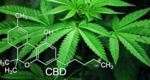 Мужчине, осужденному за выращивание марихуаны, отказали в УДО