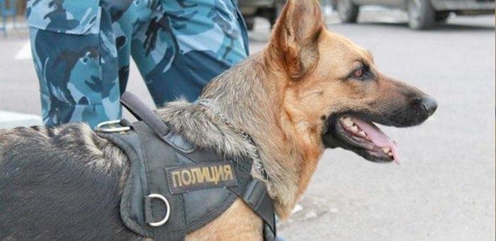 Служебная собака помогла полицейским найти грабителя