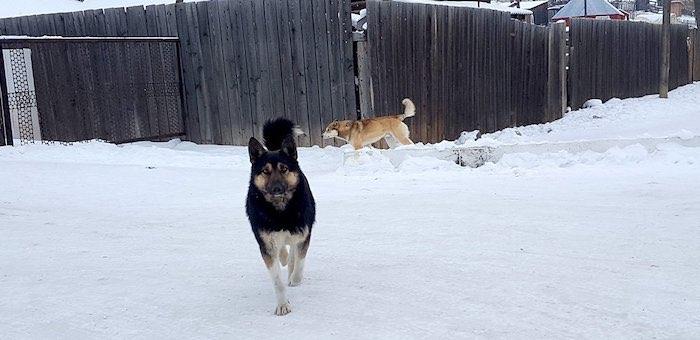 В прошлом году собаки покусали 618 человек