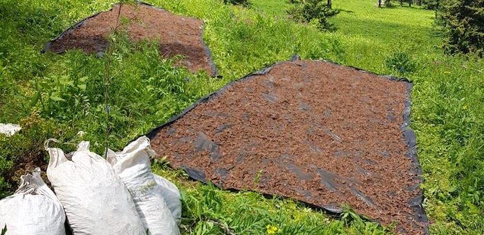 Более 8 тонн незаконно добытого «золотого корня» изъяли пограничники в минувшем году