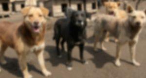 В Горно-Алтайске пройдет выставка бездомных животных