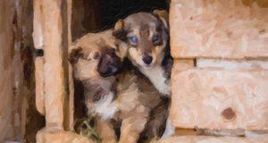 Приюты для безнадзорных животных построят в Республике Алтай