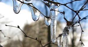Потепление до плюсовых температур ожидается на Алтае