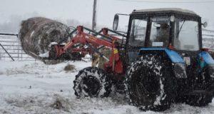 В Майминском районе зимовка скота проходит без осложнений