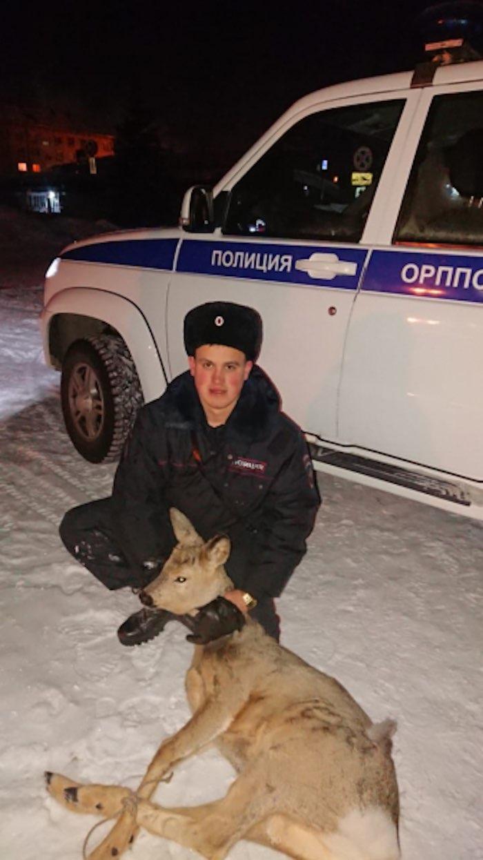 Дикая косуля бегала по улицам Горно-Алтайска