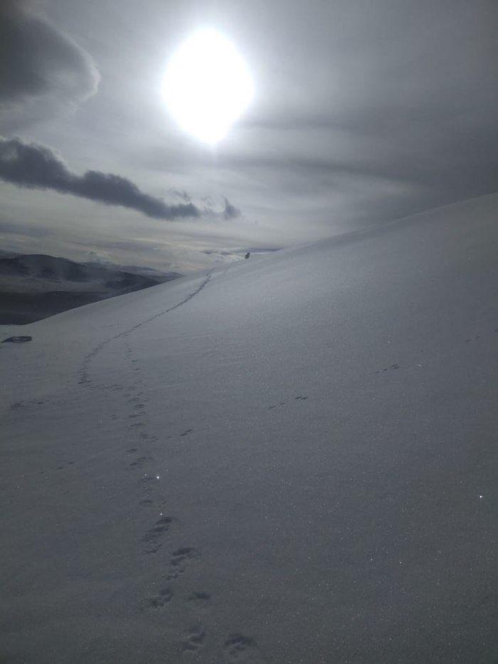 Уникальный фотоснимок: житель Кош-Агачского района встретил снежного барса