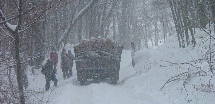 Дальнейшее развитие лесной отрасли Чойского района обсудили на совещании в правительстве