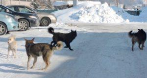 По фактам ненадлежащего содержания собак уже составлено 18 протоколов