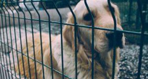 Мэрия даст грант на социальный «собачий» проект