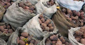 20 мешков кедровых шишек украли из гостиницы на Семинском перевале