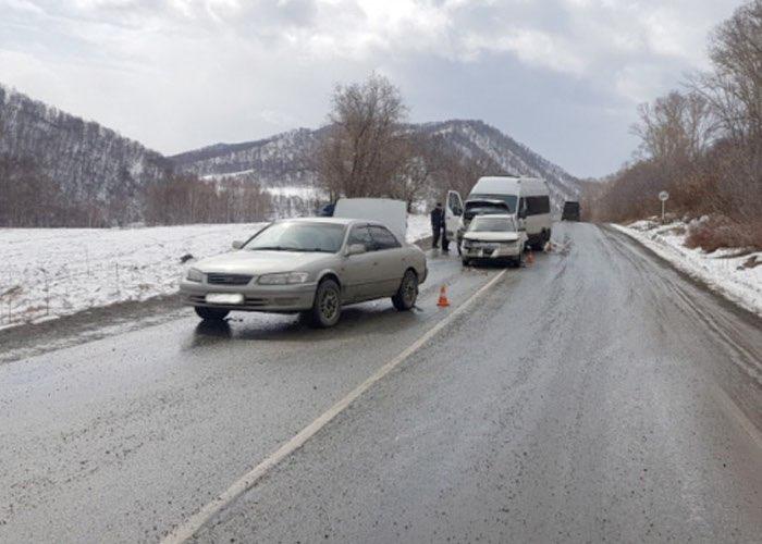 Три машины столкнулись на Чуйском тракте из-за переходивших дорогу коров