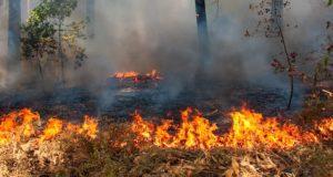 Сборщик шишек нечаянно сжег полтора гектара кедрового леса